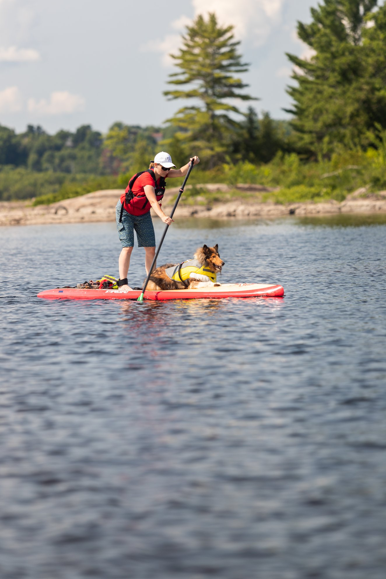 Stand up paddle boarder on the ottawa river with a dog sitting on board